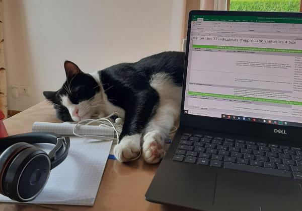 Oréo, le chat de Bérengère, notre responsable commerciale